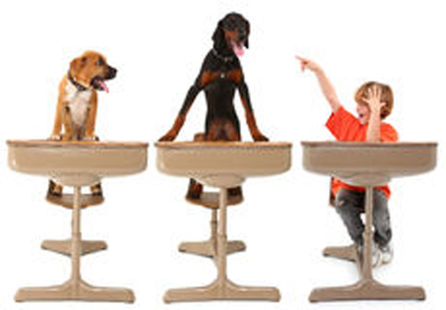 2-animal-dog-classroom-16672550-4x