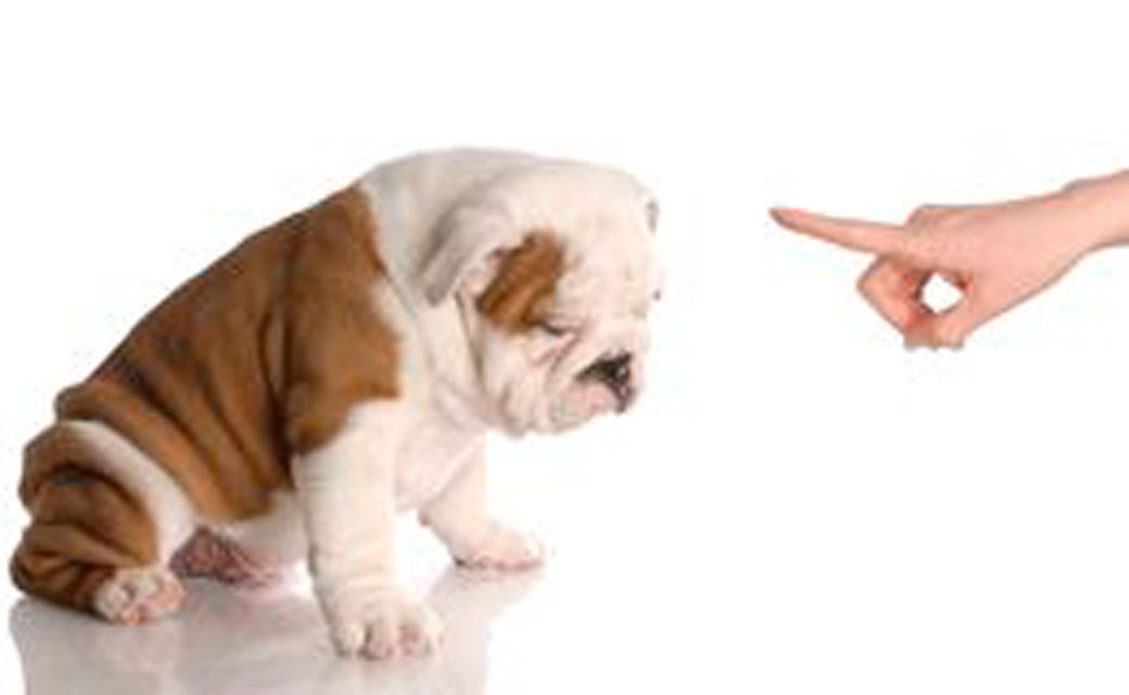 3-bad-dog-12391067-4x
