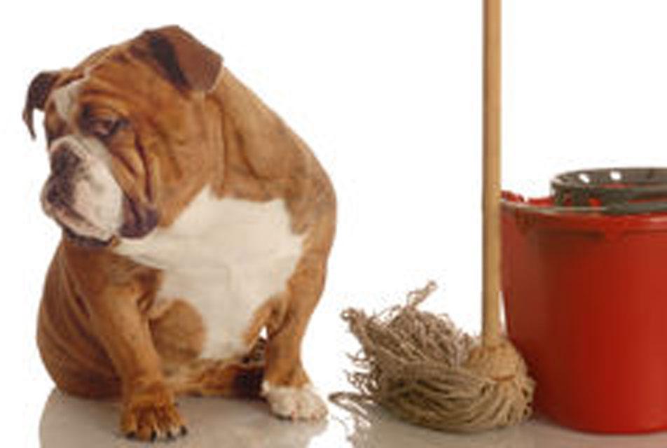 8-house-breaking-dog-6840107-4x